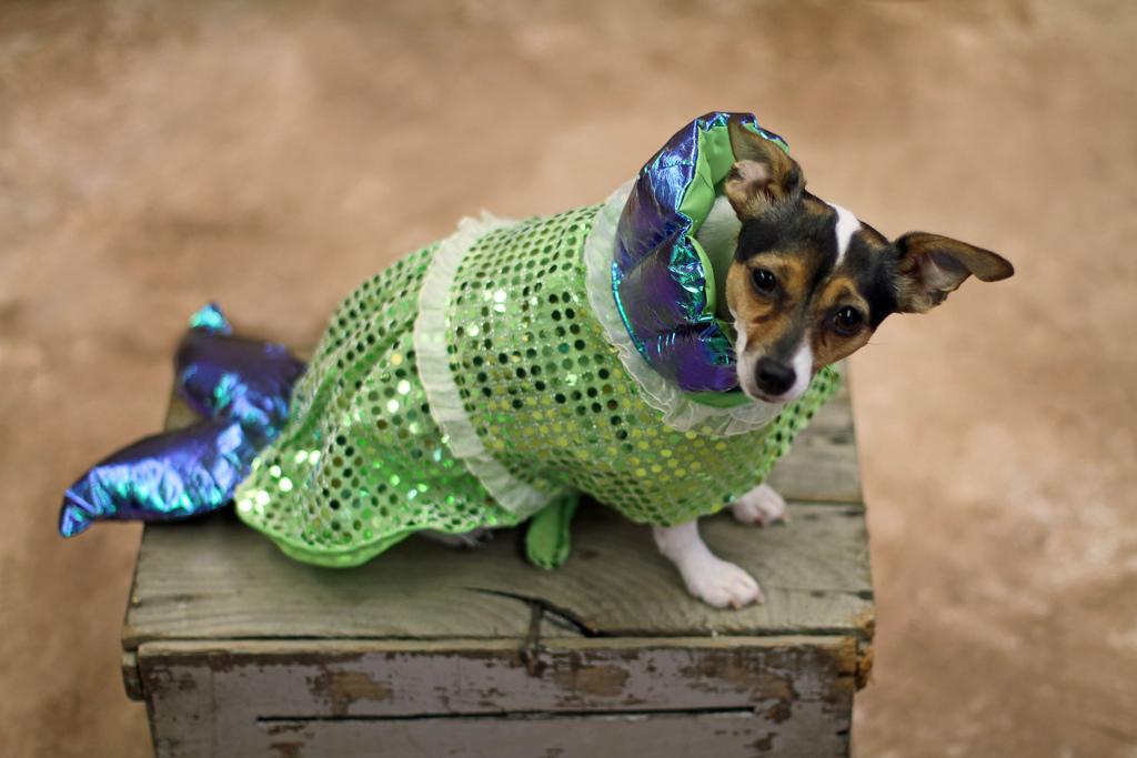 A dog in a mermaid costume