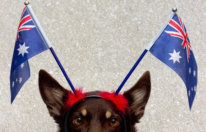 Dog with Australian flags on its head.